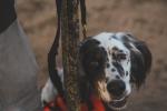 © Sport Dog Photography LLC